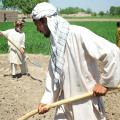 Farmers in Aliabad.
